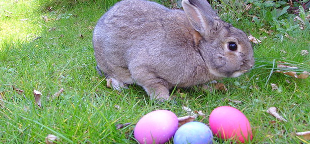 easter-bunny625