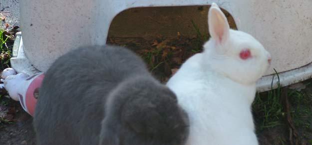 rabbits11